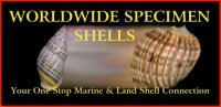 Worldwide Specimen Shells