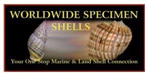 Worldwideconchology Worldwide Specimen Shells